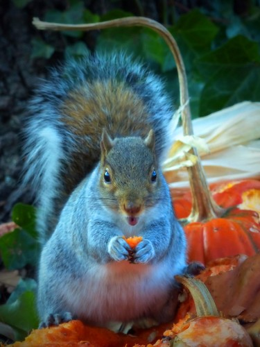 Happy squirrel | by Zsaj