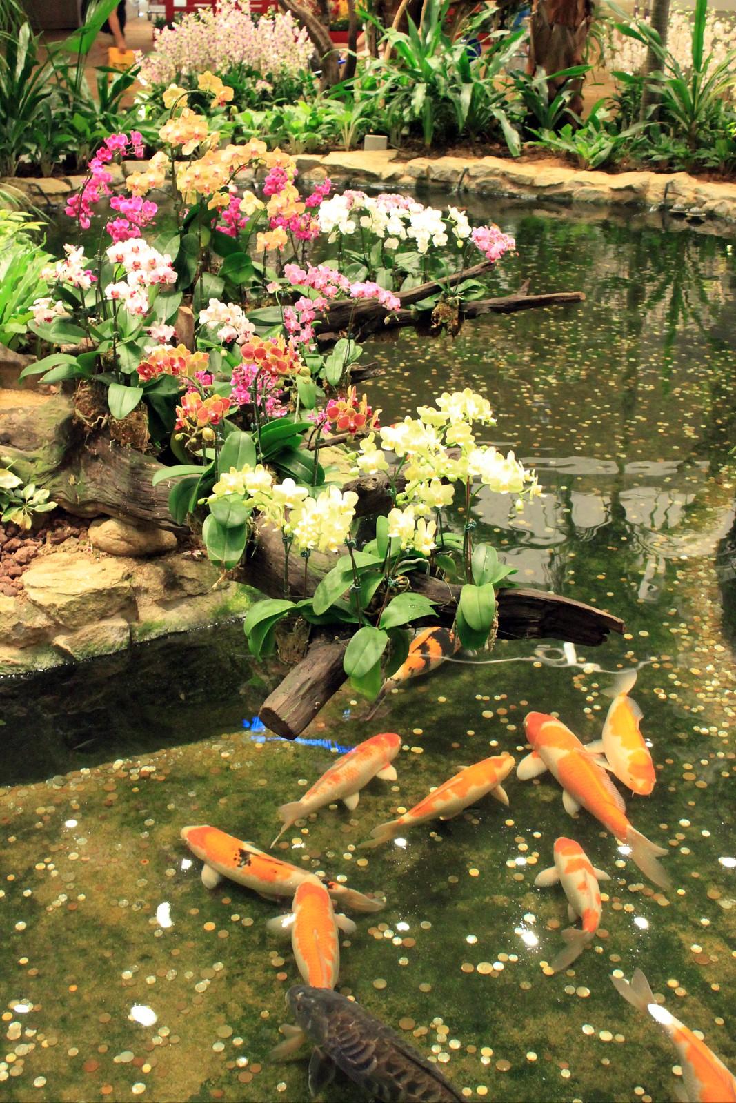 Orchideengarten im Changi Airport Singapur (6)