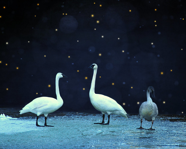 on frozen pond . . .