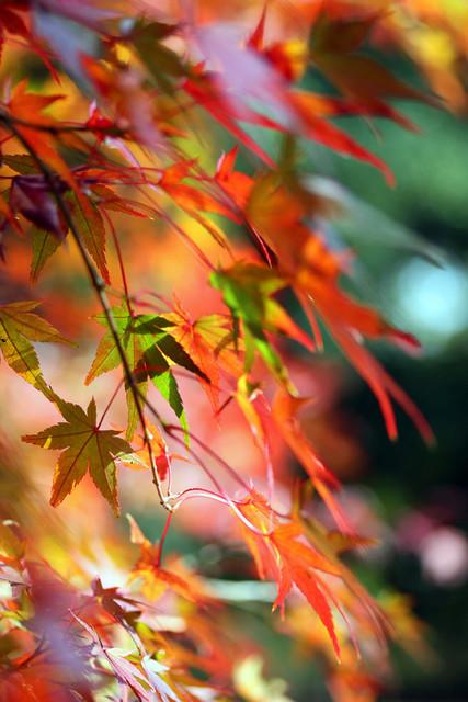 Autumn leaves ~彩~ I