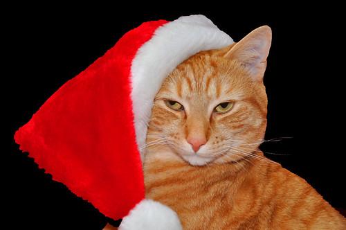 Santa Pete on black!!!!!