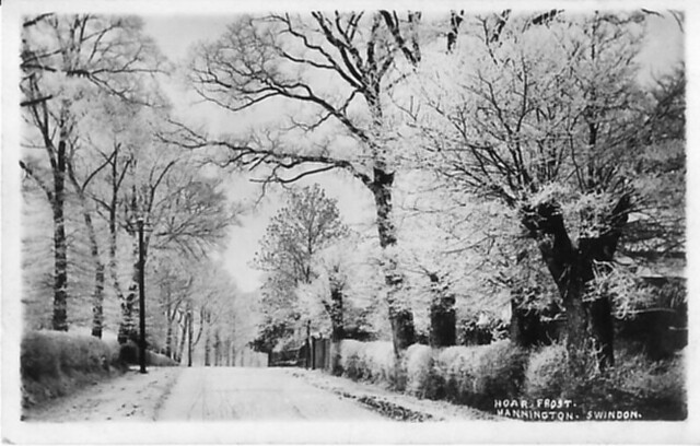 1908: 'Hoar frost' at Mannington, Swindon (Postcard)