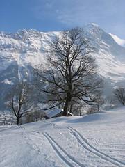 Eiger, strom, ticho, sníh...prostě podvečerní romantika