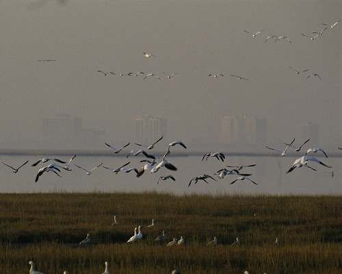 Photo of the Week - Edwin B. Forsythe National Wildlife Refuge (NJ) | by U. S. Fish and Wildlife Service - Northeast Region