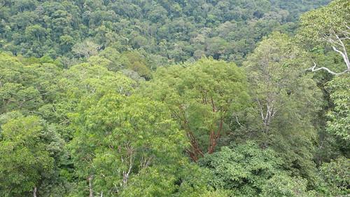 Thu, 03/13/2008 - 11:15 - View over the steep ridges of Kuala Belalong. Credit: CTFS