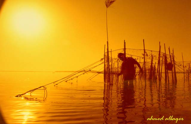 When the sun rises over fishing  الصيد عند الشروق