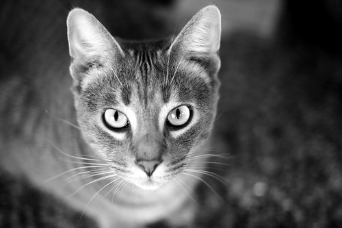 03/08/08 Mr. Baby Cat | by angelle321