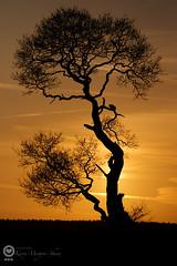 Ria's tree at sunset 3