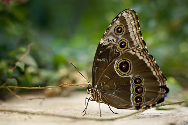 Butterfly Palace 5920