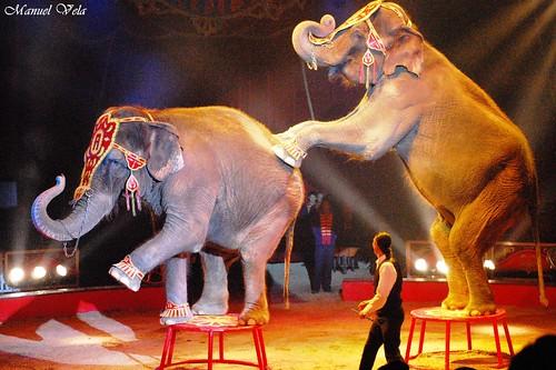 DSC_0047 Circo ATAYDE HNOS simplemente extraordinario espectáculo por LAE Manuel Vela