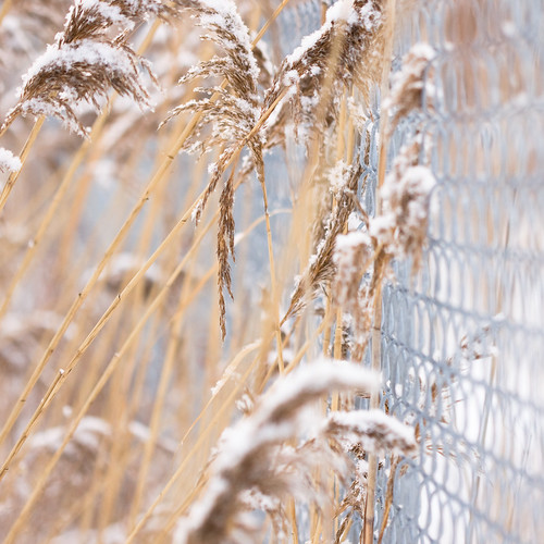 The snow, the plant and the fence - Picture exercice | by haban hero