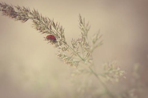 Day 151. | Nunquam non paratus | Flickr
