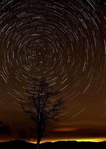 city longexposure tree night stars virginia washingtondc nikon glow horizon dcist shenandoah overlook startrails skylinedrive polaris leonids d90 buckhollow dcistexposed dcistexposed2010