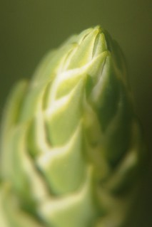 Budding leaves | by wolfpix