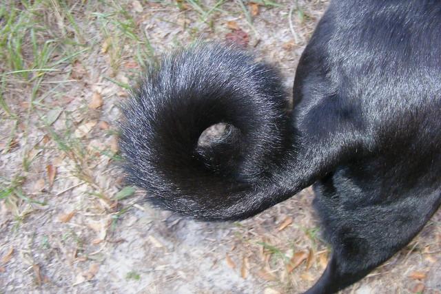 18/365 the eye of Sadie's tail