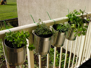 Herbs in coffee cans, hung with zip ties. I take no credit for this, it is all my husbands doing : ) | by Dolly Wog