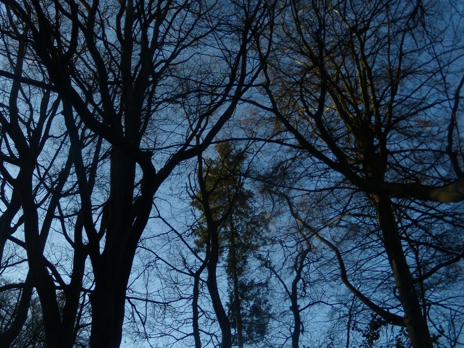 Trees DSCN8251 Haslemere Round Walk