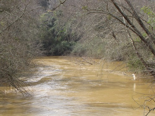 winter brown tree trash river spring mud flood current athensgeorgia