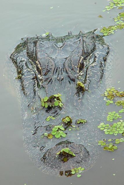Mississippi Swamp Tours