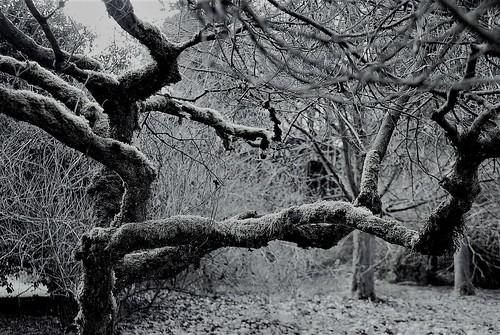Winter Still Life:  Washington Park Arboretum, Seattle WA