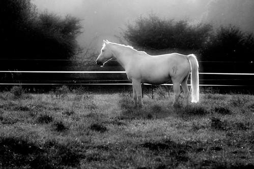 horse white dream weiss pferd whitehorse traum