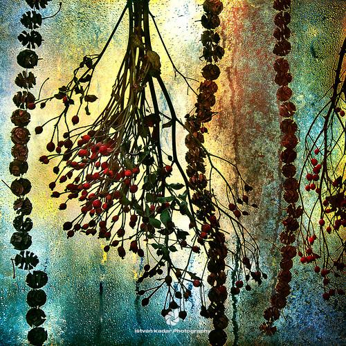 winter window yellow garden lights colourful hip dryplants selectbestexcellence sbfmasterpiece