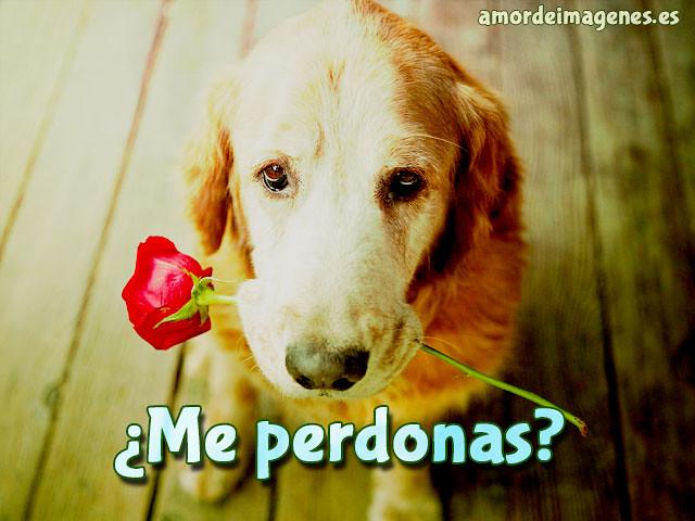 Imagenes De Perritos De Amor Hola Mis Queridos Y Enamorado Flickr
