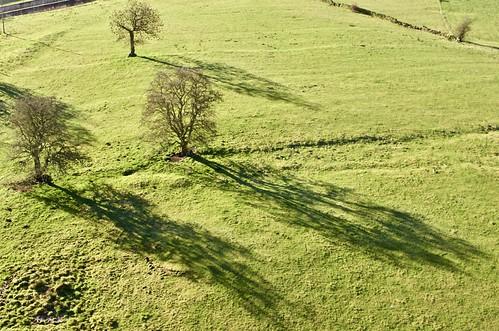 trees shadows lowsun westyorkshire hewenden england greenandpleasantland winter field grass