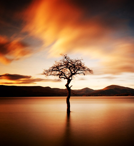 """That tree"" at Milarrochy, Loch Lomond 
