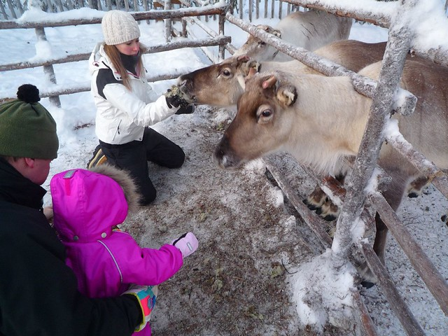 alimentando a renos