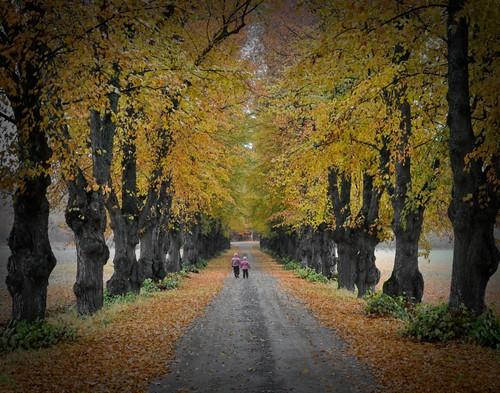 autumn fall nature alley nikon walk caslte ősz 18200vr fasor wäsby séta nikond90 storawäsby krillephoto storawäsbyallé
