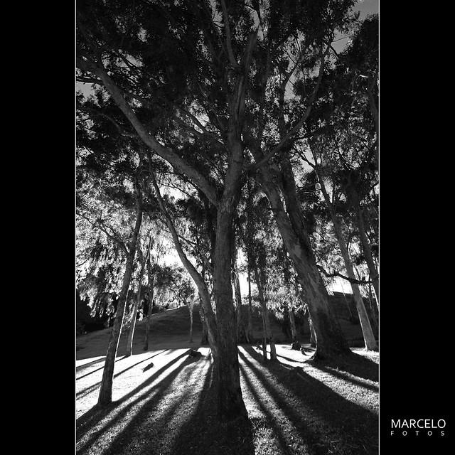 Na sombra de uma árvore na Pousada dos Lobos