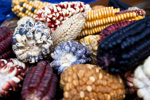 Colourful Maize | by Julie Edgley