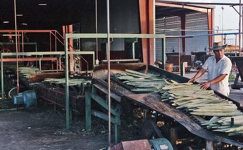 71 sisal factory