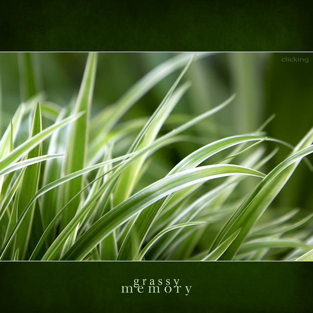 grassy memory - [ EXPLORED ]