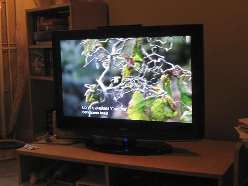 TV Monitor