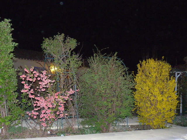 Mon Jardin Printemps 2010 Nuit - Massif Coignassier du Jap… | Flickr
