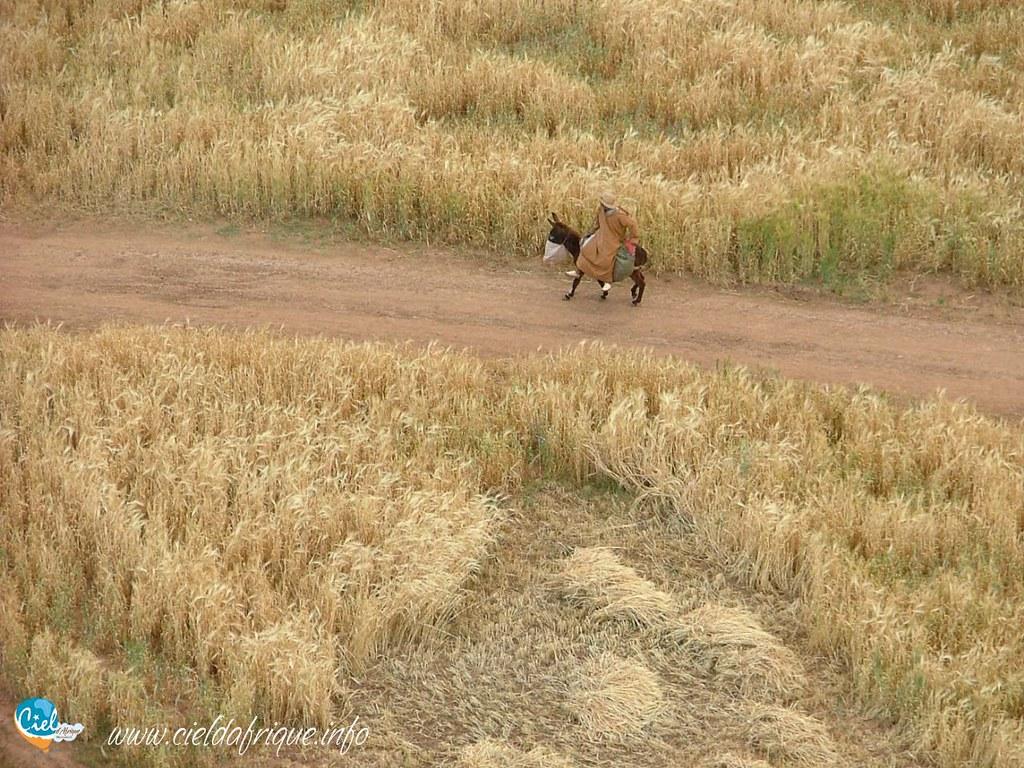 Il est là :-) | www.cieldafrique.info | Ciel d'Afrique | FlickrFlickr
