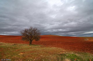 Despues de la Tormenta 2 | by asoria73