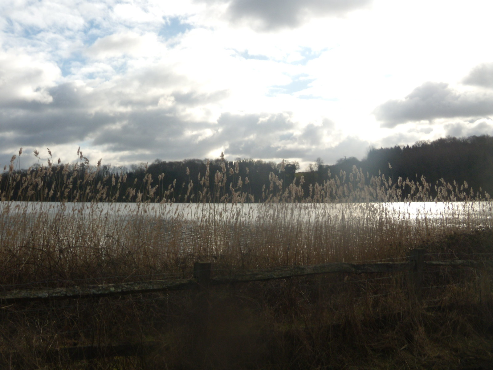 Reeds 'n' reservoir Balcombe round (winter)