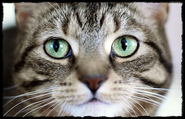 Close-Up, Mister DeMille