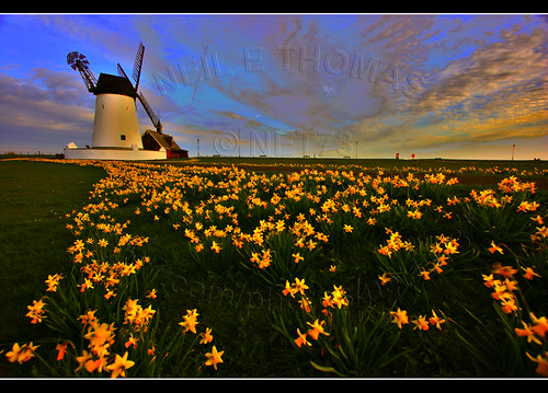 sky green windmill yellow clouds photoshop spring glow lytham april hdr daffodils 2010 lightroom canon1022mm canoneos400d flickraward flickraward5 net73 neilethomas