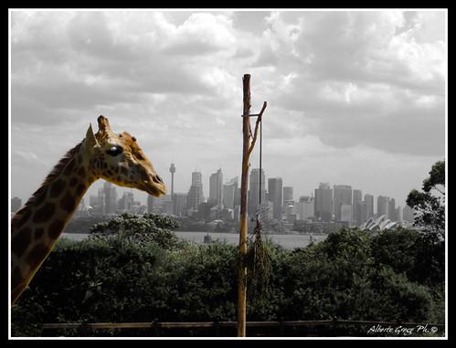 Sydney Form Taronga zoo