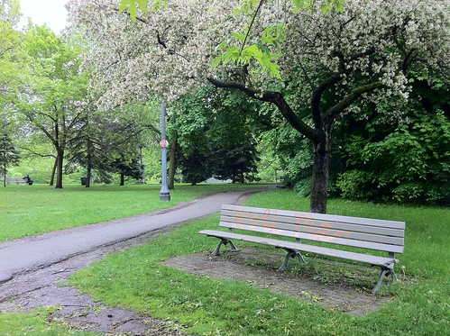 Bench in Trinity Bellwoods Park, Toronto | by margonaut