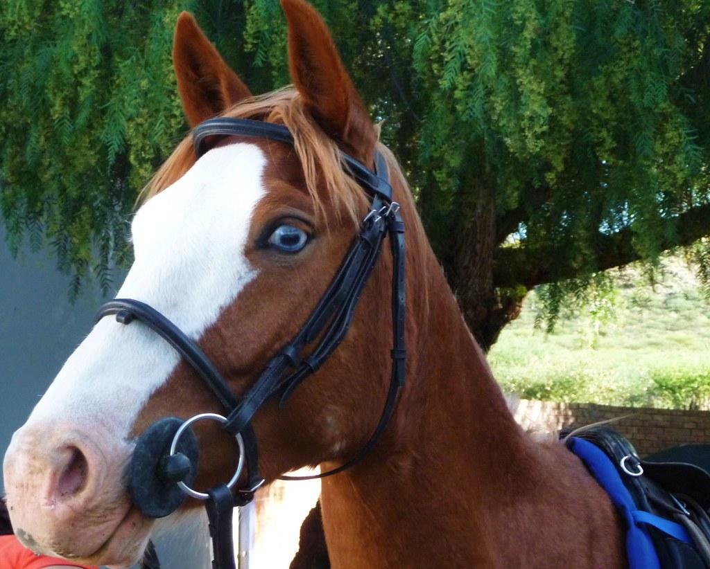 Sleeping Beauty Paula S Horse S Eeping Beauty She Ha Flickr