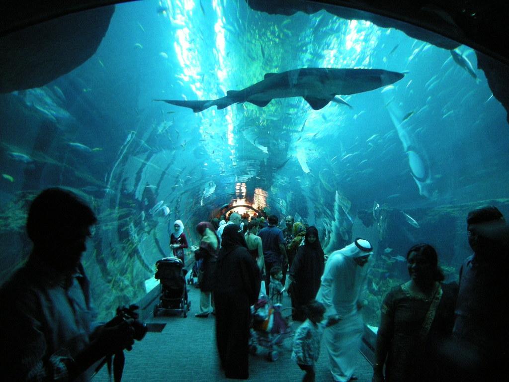 Dubai-Guide-aquarium