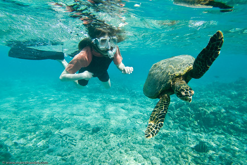sea children person hawaii turtle snorkeling tropical northkona familygetty2010