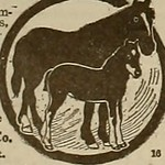 "Image from page 209 of ""Breeder and sportsman"" (1882)"