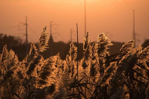 john heinz national wildlife refuge tinicum canon eos rebel t6s 760d efs55250mmisstm efs 55250mm is stm sunset
