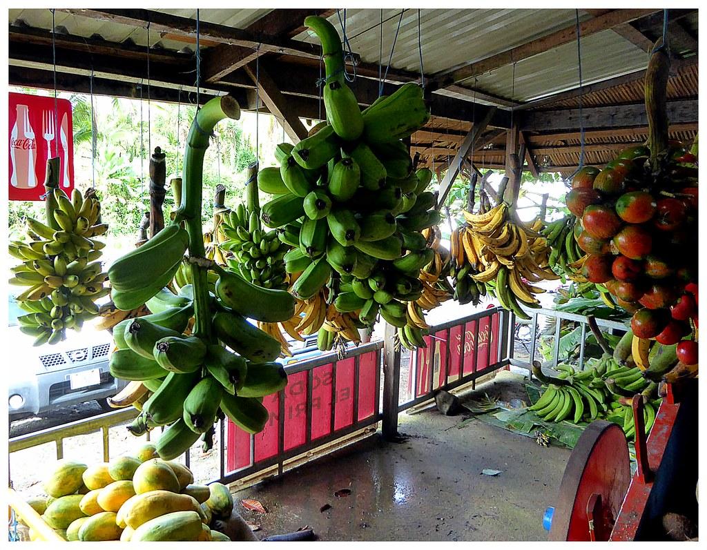 """Des grosses légumes de Costa Rica. La banane plantain, consommée frites, comme féculent. Le fruit à droite est le """"Frutos de Pijuayo"""" le fruit du palmier """"bactris gasipaes"""", celui-là même qui fournit le coeur de palmier."""